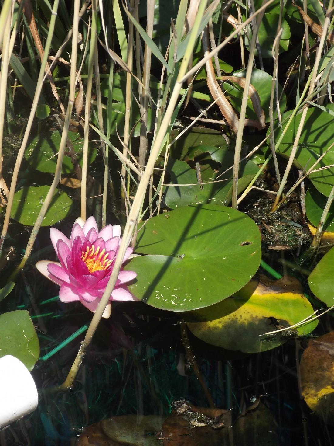 Wellness 101 Lotus Flower And Yoga
